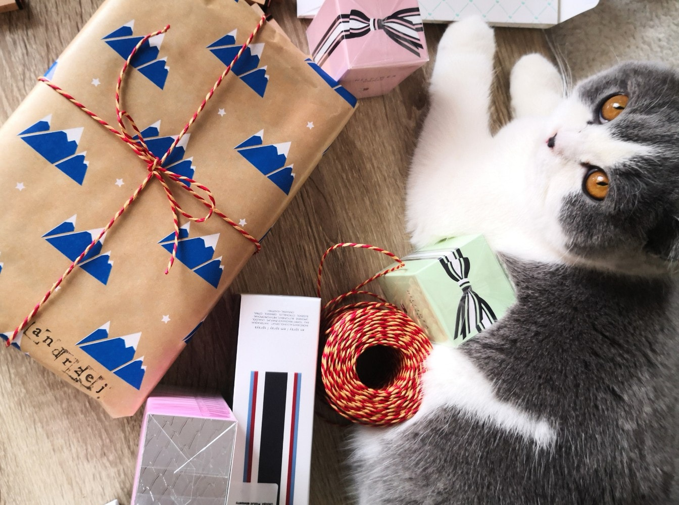 british cat laying on the desk with perfect christmas gifts for cat lovers