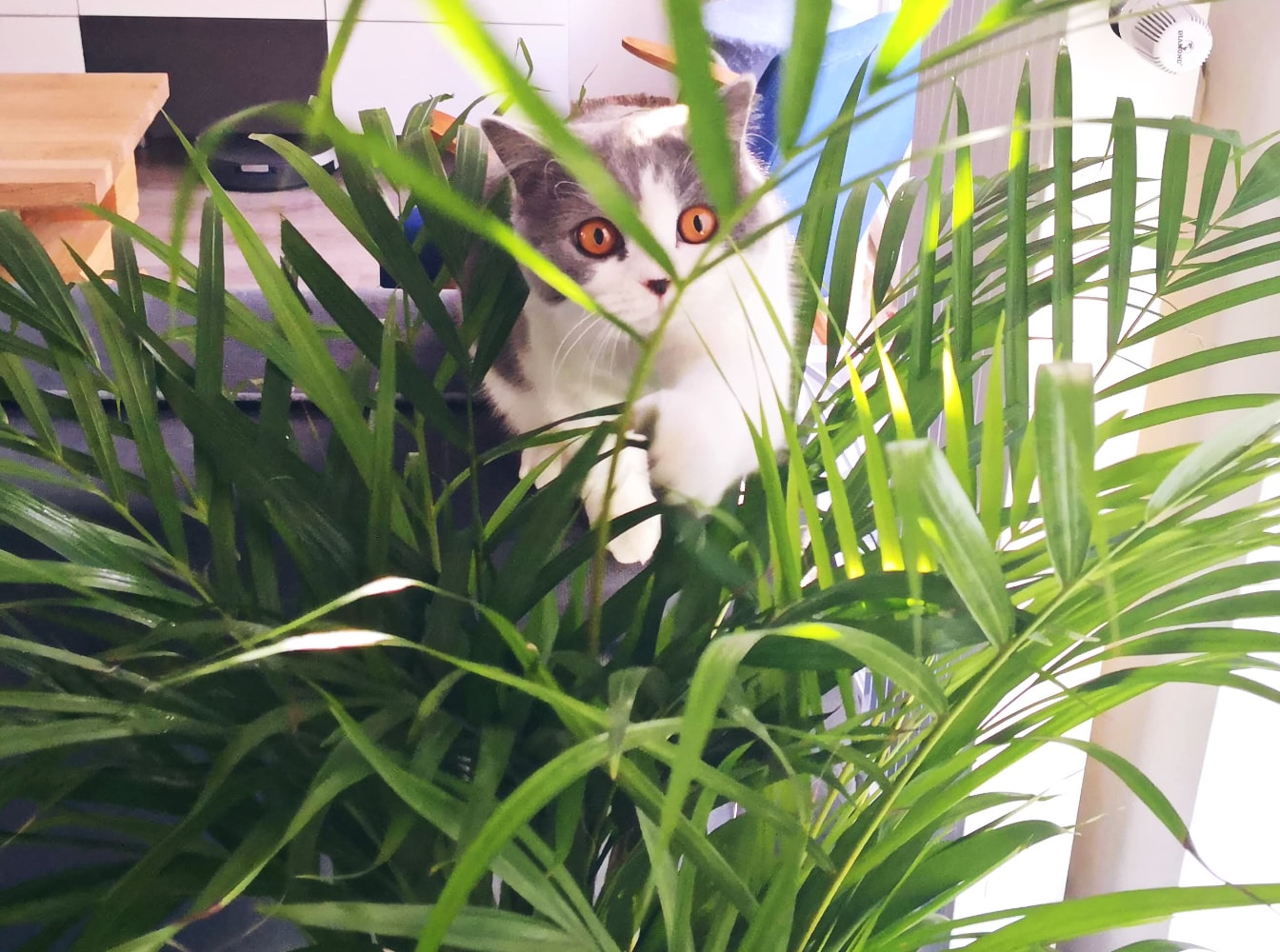 flowers safe for animals british cat in flowers cats friendly houseplants
