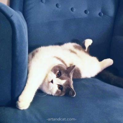 british cat funny laying on blue armchair cute cats cat's hygge