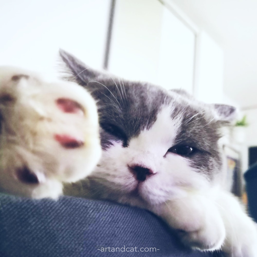 cute british cat on sofa sweet cat's paw cat's hygge slow life
